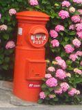 01-1) 14..06.09「力餅家」の隣、郵便ポストを覆いそうな紫陽花。 _ 鎌倉市坂ノ下
