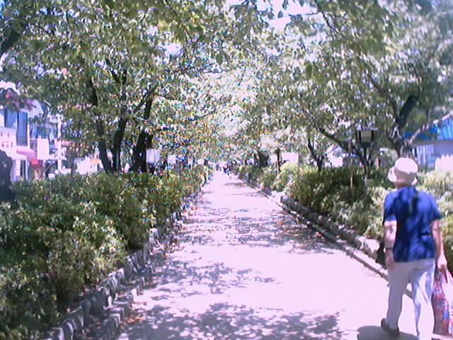 04)段葛(2)
