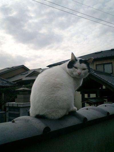 11)鎌倉市材木座「光明寺」午前来た時とはうって変わって、再訪した今は全く警戒を解いていた。