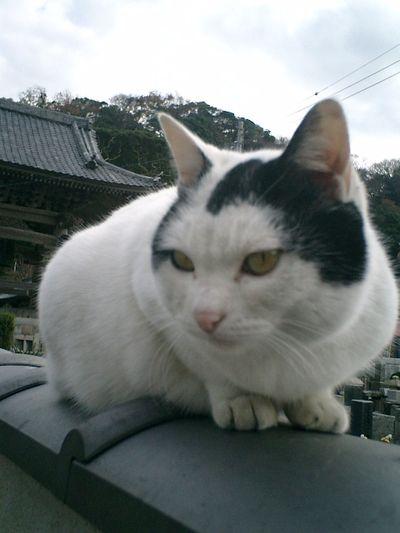 13)鎌倉市材木座「光明寺」'金子マリ'のプロフィール用?写真を撮った。