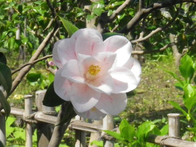 06-2) 「春のうてな」