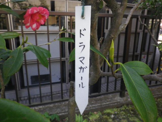 10-1) 「ドラマガール」