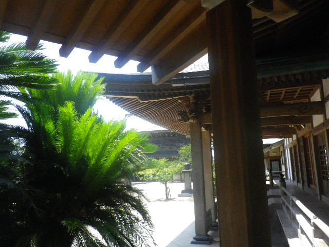 01) 14.07.15鎌倉「光明寺」 蓮の花