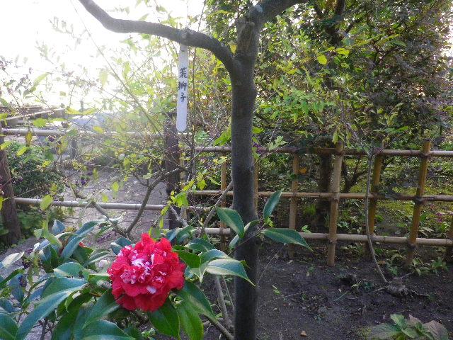 02-2) 14.11.14鎌倉「大巧寺」初冬の庭