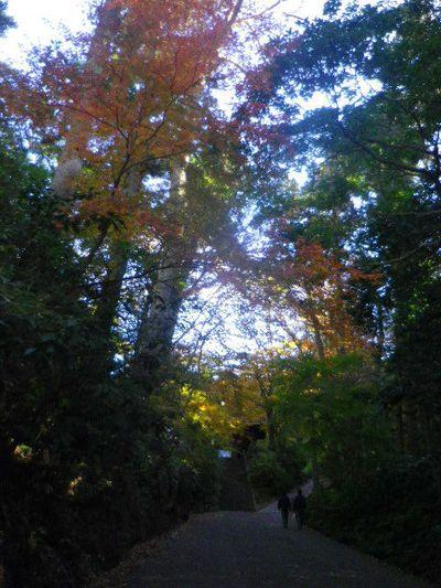 01)  14.12.15鎌倉「妙本寺」赤や黄色の葉が散り始める頃