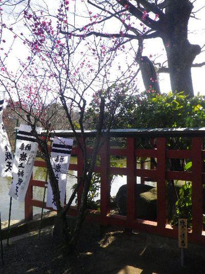 05-2-01) ' 旗上弁財天社 ' 社殿裏 ' 政子石 ' 周辺