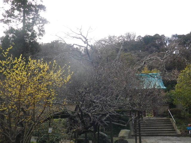 01-0) 15.02.21 早春の鎌倉「光則寺」