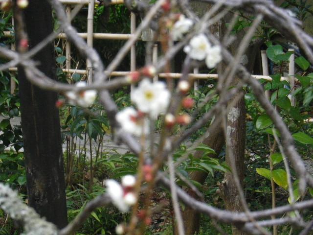 05-5) 15.02.21 早春の鎌倉「光則寺」