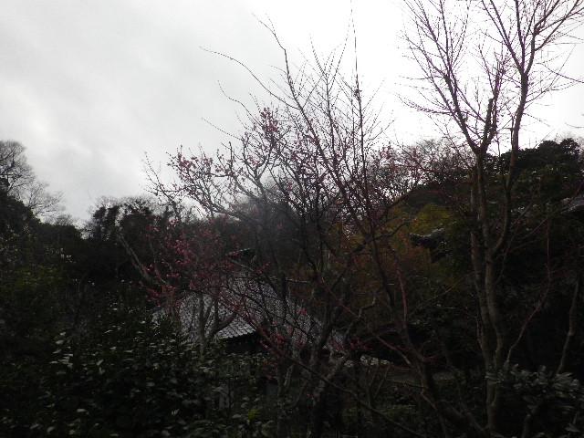 07-1) 15.02.21 早春の鎌倉「光則寺」