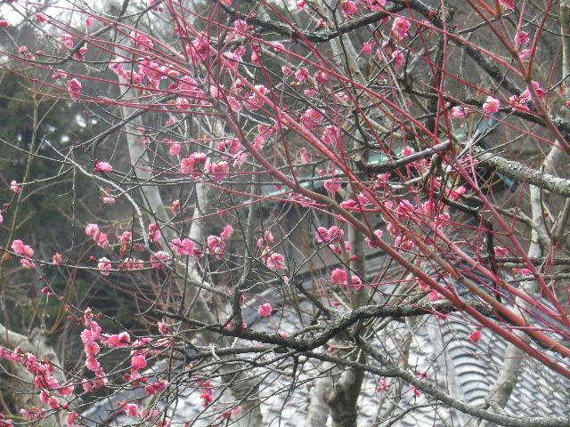 07-2) 15.02.21 早春の鎌倉「光則寺」
