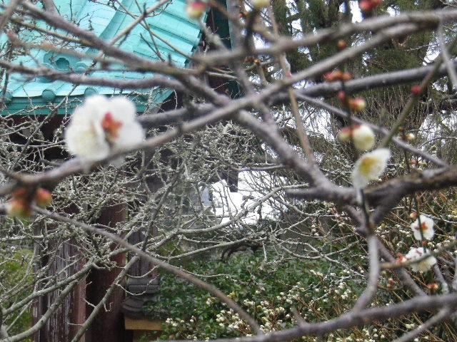 08-2) 15.02.21 早春の鎌倉「光則寺」