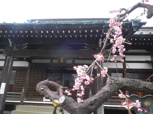 05) 浄土宗 内裏山霊嶽院九品寺 ( だいりさんれいがくいんくほんじ )