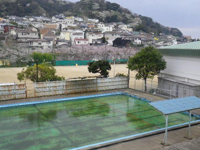 04-1) 葉山小学校裏から見た、写真中段:R134沿いの桜 と 写真上段:山桜。
