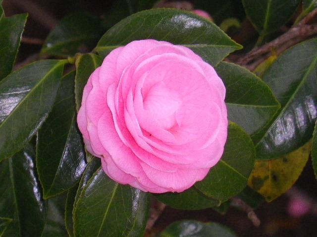 07-3) 15.04.01 「逗子市立 披露山公園」の桜