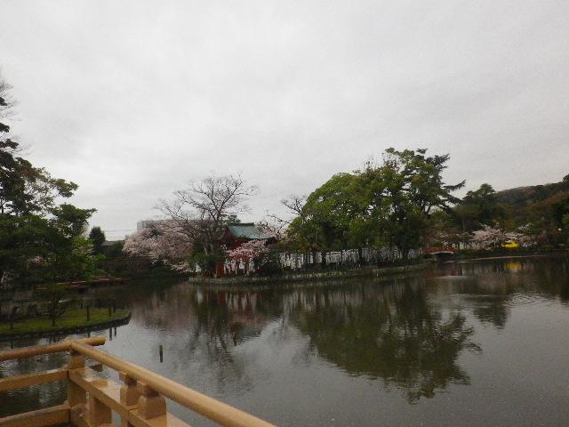 05) 15.04.04雨 鎌倉「鶴岡八幡宮」雨の観桜