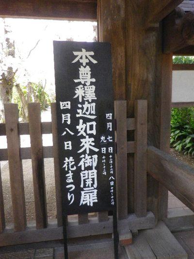 05)15.04.06 鎌倉「極楽寺」桜が散り始める頃