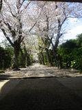 03) 15.04.06 鎌倉「極楽寺」桜が散り始める頃