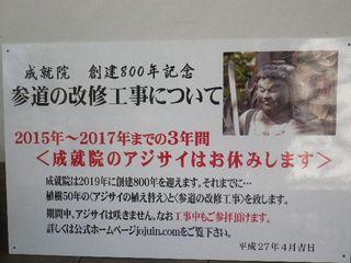 06-4) 15.04.06 鎌倉「成就院」桜咲く時期の終焉を見届ける