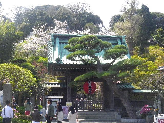 02-1) 15.04.06 桜咲く頃、鎌倉「長谷寺」を外部から眺めた。