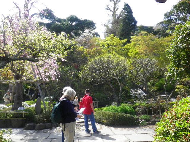 11)  15.04.06 桜咲く頃、鎌倉「長谷寺」を外部から眺めた。