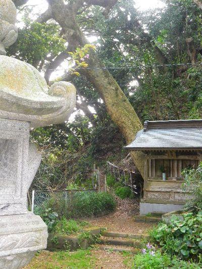 11) 15.04.06 ' 山の音 '、鎌倉最古「甘縄神明宮」桜の頃。