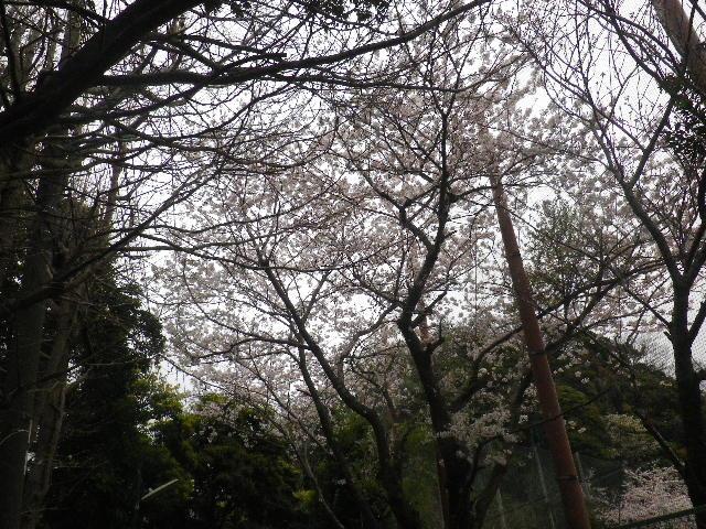 06-1-a) 鎌倉市立第一中学校校門周辺