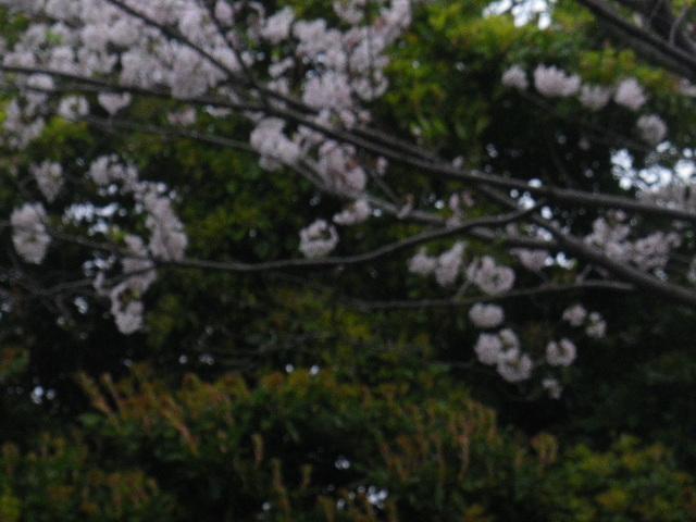 06-1-b) 鎌倉市立第一中学校校門周辺
