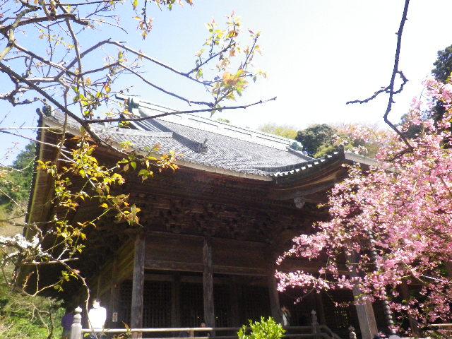 06) 15.04.09 鎌倉市「妙本寺」海棠が咲く頃