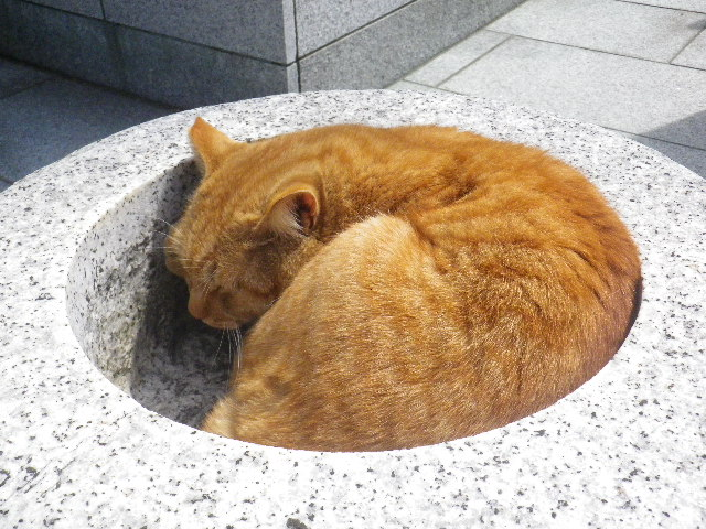 05-4) もともと人懐こくて、私が近づいても頭を潜らせた ' 梶井基次郎 ' ( 本名 ' レモン ' )。