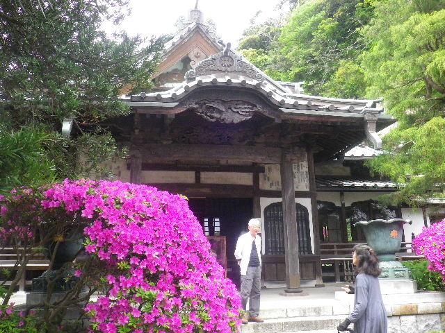 02-4) 15.05.05 ツツジがピークの、鎌倉「安養院」。