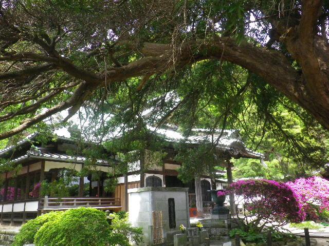 02-5) 15.05.05 ツツジがピークの、鎌倉「安養院」。