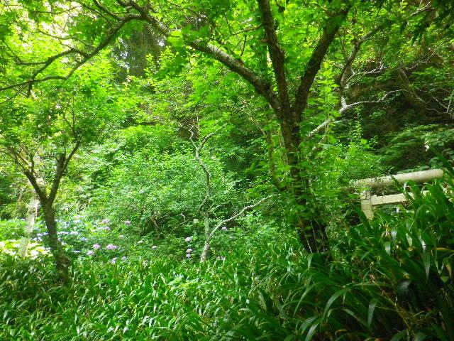 03-1) ' 熊野神社 ' 方向の高台