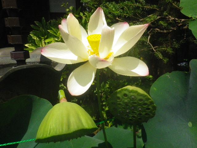 06-2) _ 15.08.09 鎌倉「大巧寺」初秋と呼ぶには早過ぎの感あり、立秋の翌日。