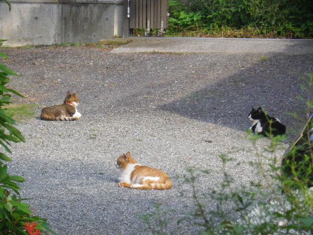 03-1) アソコ ' 左 ' 元々の飼猫たちと、アソコ ' 左 ' 様に引き取られたアソコの元メンバーたち。