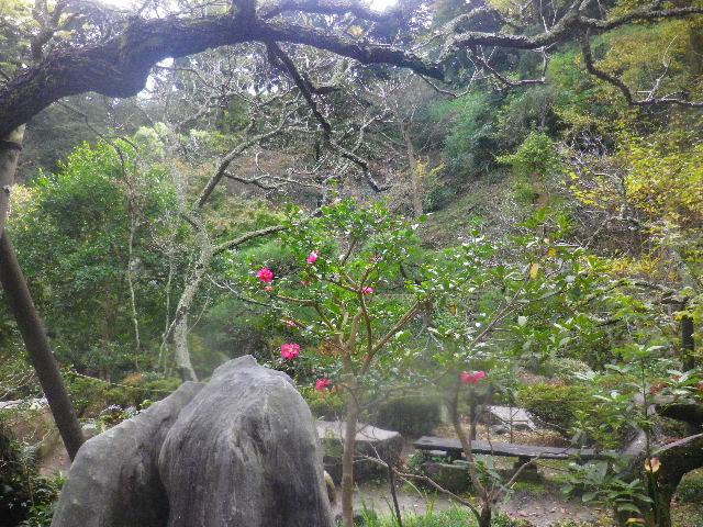 08-1)  15.11.17 初冬の鎌倉「光則寺」