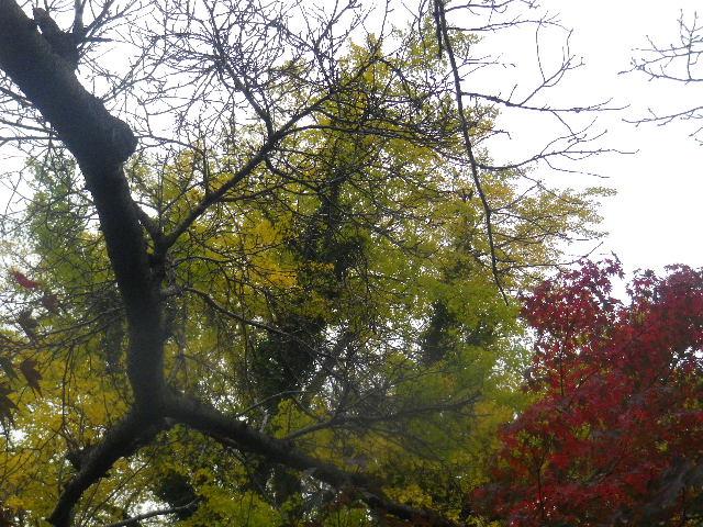 03-3) 先に色づき始めた紅葉