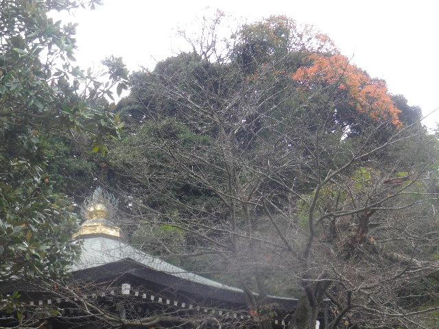 04) ポツンと在る、枯れ落ちる寸前の名を知らぬ木。