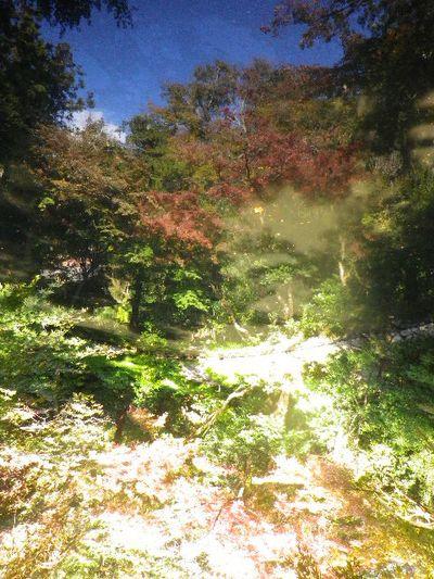 02-2b) これでも、下半分を池に映る紅葉を撮ったつもり。 _ ' 柳原神池 ' 周辺 _ 15.11.30 鎌倉「鶴岡八幡宮」葉が色づき始める頃