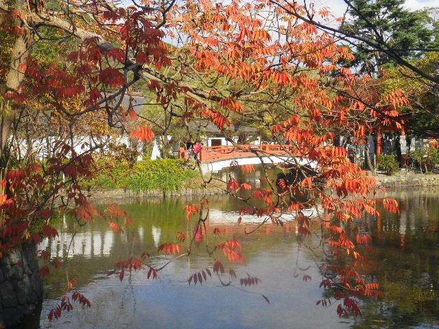 04-2b) ' 源平池 ' の 源氏池 _ 15.11.30 鎌倉「鶴岡八幡宮」葉が色づき始める頃