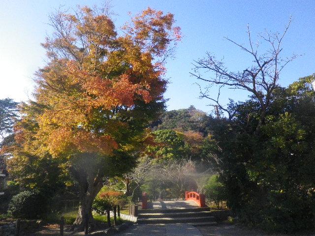 07-1) ' 源平池 ' の 平家池 _ 15.11.30 鎌倉「鶴岡八幡宮」葉が色づき始める頃