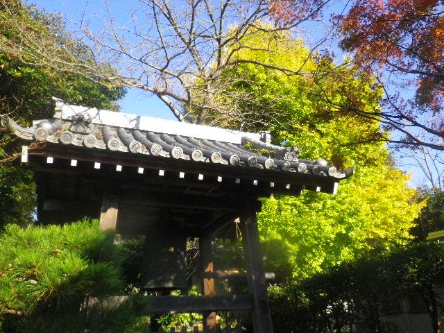 04-2)  15.11.30 鎌倉「浄光明寺」葉が色づく頃
