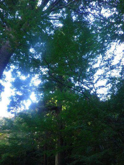 10) 山門までの階段周辺は、まだ緑。 _ 15.12.05 鎌倉「瑞泉寺」紅葉は、微妙に もう少し先。