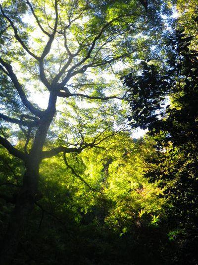 11) 山門までの階段周辺は、まだ緑。 _ 15.12.05 鎌倉「瑞泉寺」紅葉は、微妙に もう少し先。