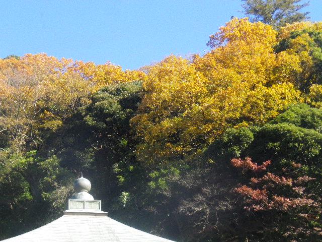 33-2) _ 15.12.05 鎌倉「瑞泉寺」紅葉は、微妙に もう少し先。