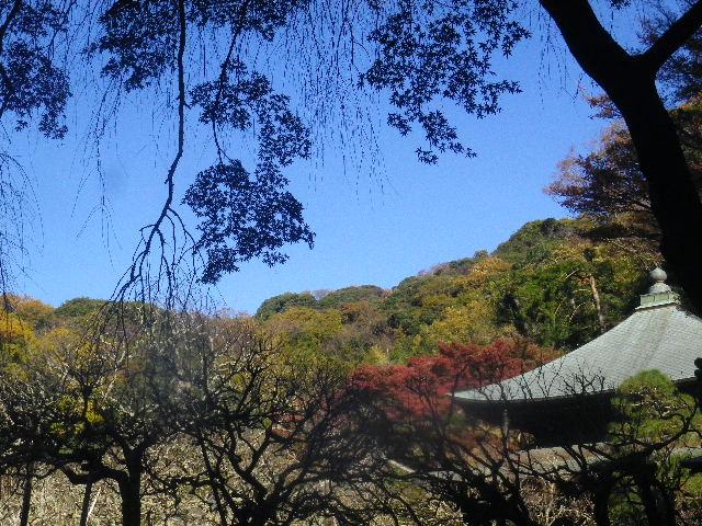35) _ 15.12.05 鎌倉「瑞泉寺」紅葉は、微妙に もう少し先。