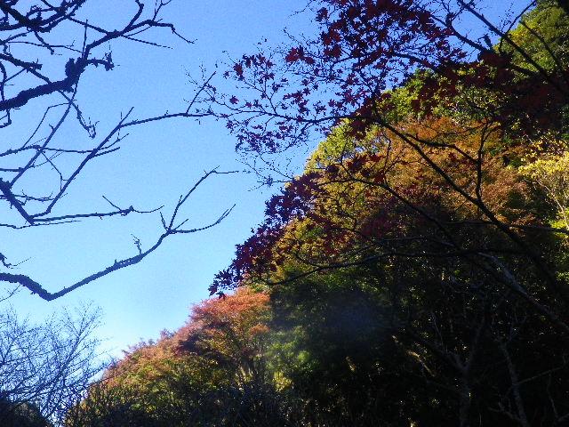 37) _ 15.12.05 鎌倉「瑞泉寺」紅葉は、微妙に もう少し先。