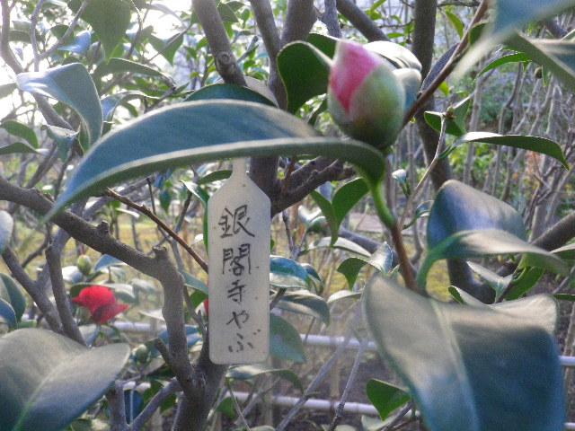 17-1) 銀閣寺やぶ
