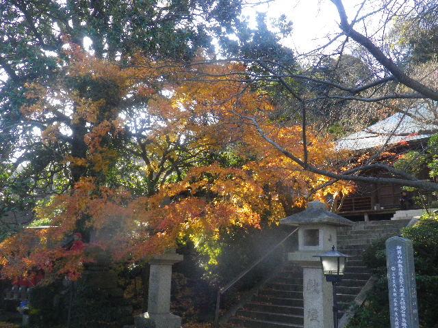 03-1)   15.12.12 鎌倉「長勝寺」枯木は紅葉の終焉を迎え、若木は未だ楽しめる。