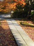 03-4)   15.12.12 鎌倉「長勝寺」枯木は紅葉の終焉を迎え、若木は未だ楽しめる。