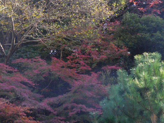 07-2)   15.12.12 鎌倉「安国論寺」連日の強風を豪雨にも耐えた紅葉と黄葉